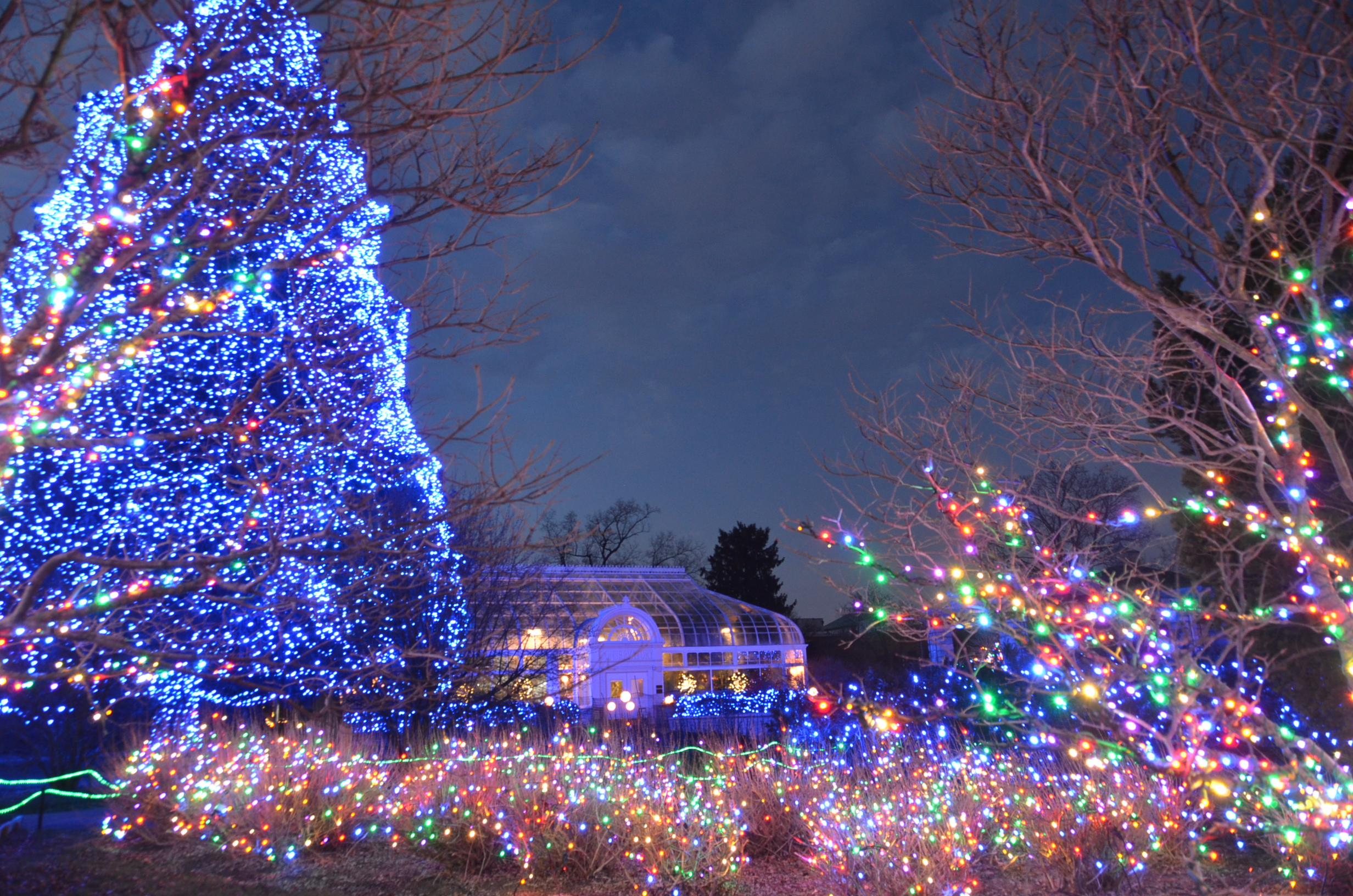 Toledo Zoo Christmas 2021 Dates Ypac Holiday Howler At The Toledo Zoo Bcan